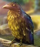 7r-corbin-full