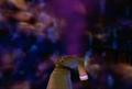 Thumbnail for version as of 06:16, September 11, 2010