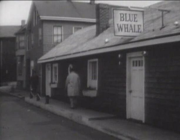 File:Blue Whale.jpg