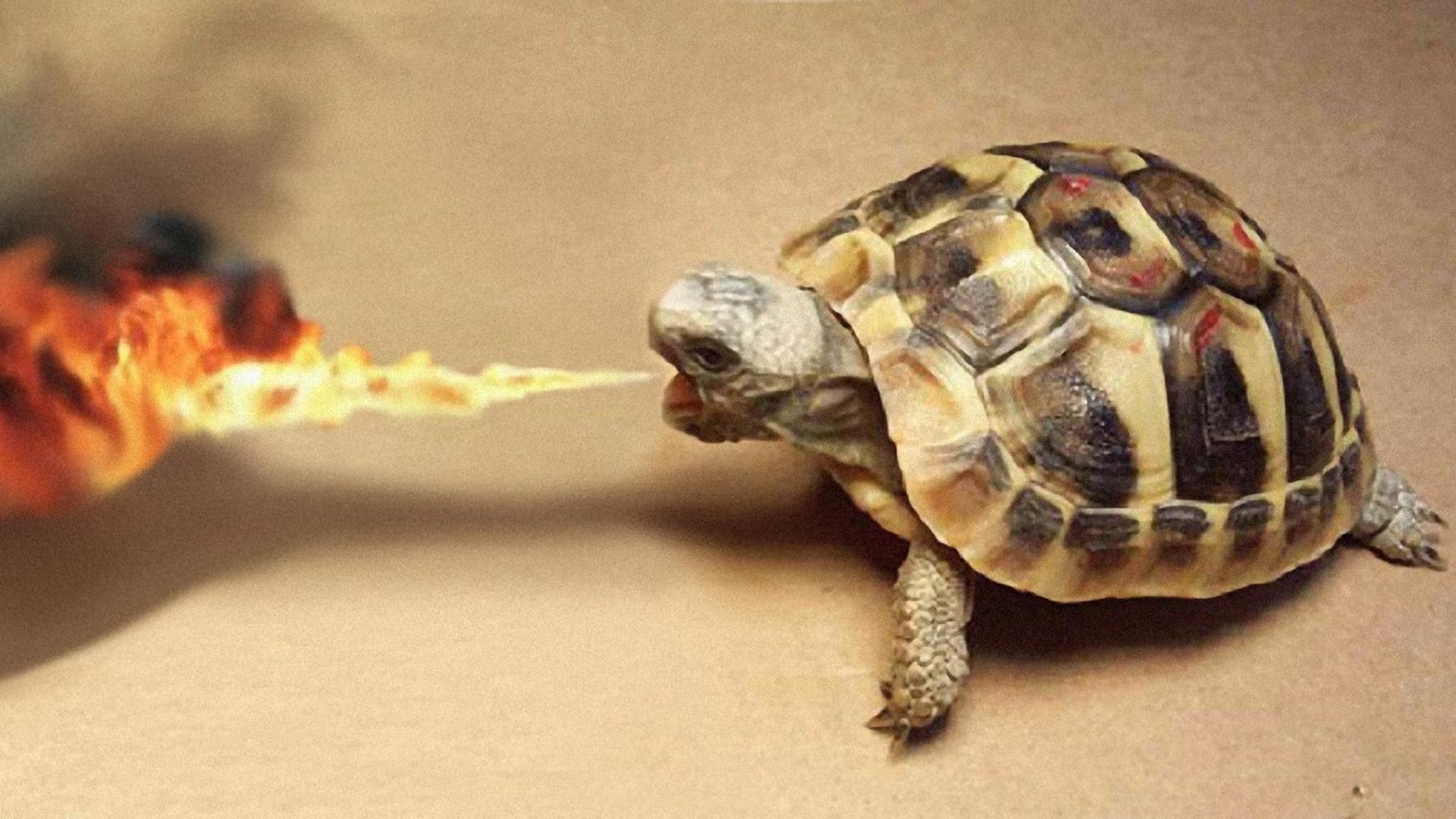 wallpaper funny turtle rain - photo #9