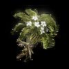Budding Green Blossom