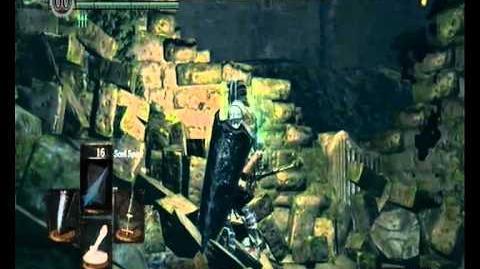 Dark Souls - Divine Ember & Watchtower Basement Key location in Darkroot Garden