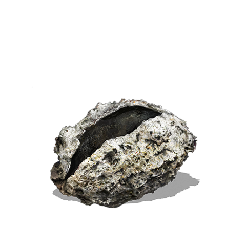 File:Shriving Stone.png