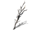 Witchtree Branch (Dark Souls III)