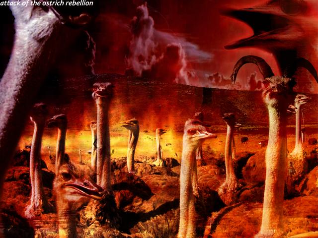 File:Ostrich-rebellion.png