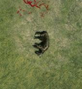 Wild dog dead