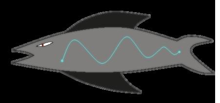 File:Fish B V2.png