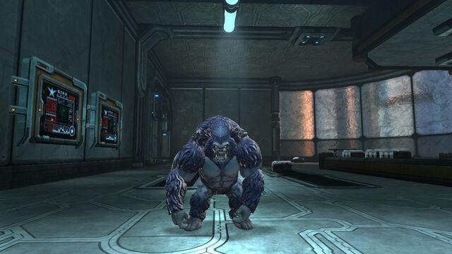 File:Lloyd the gorilla.jpg