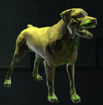 Canine Form