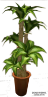 Dead rising Potted Plant 6