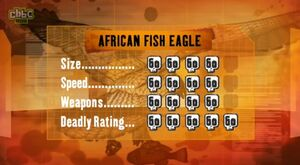 S1 DR African Fish Eagle