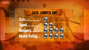 S1 DR jumper ant