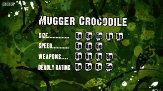 S3 DR mugger croc