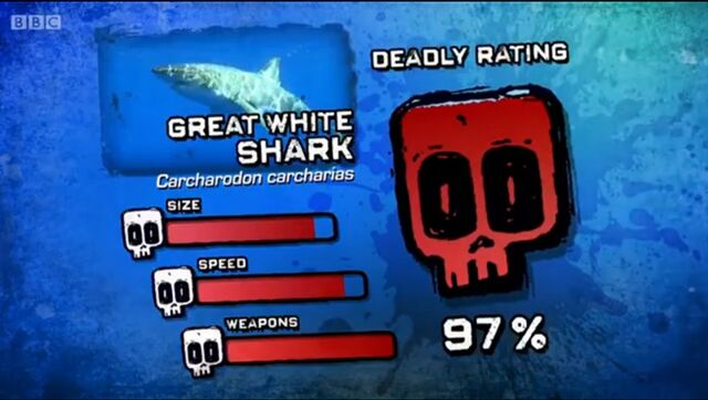 File:Ptp dr great white shark.jpg