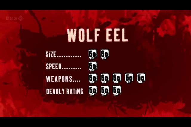 File:Wolf Eel.PNG