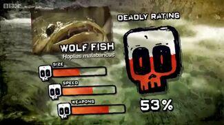 Ptp dr wolf fish