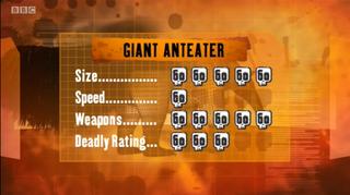 S1 DR Giant anteater