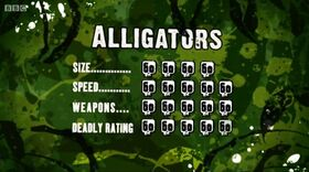 S3 DR alligator