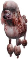 Zombie poodle CTYD (2)