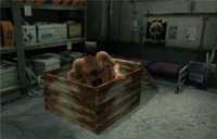 Crate in hideout