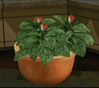 Dead rising plant small