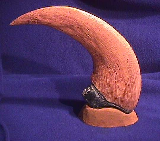 File:DINO UTAHRAPTOR CLAW BASE.jpg