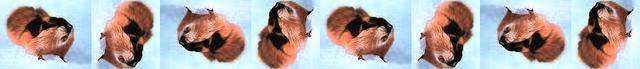 File:Lemming rotation.png