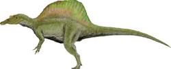 Accurate Spinosaurus