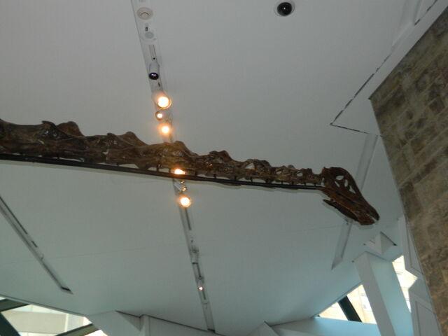 File:Barosaurus.JPG