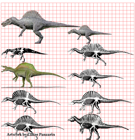 File:Spinosaurus super scale.png