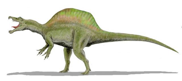 File:Spinosaurus BW.png