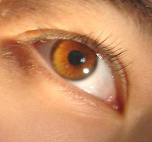 File:30349korys golden eyes (1).jpg