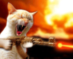 File:Mad Kitty (Animated GIF, click All Sizes).jpg