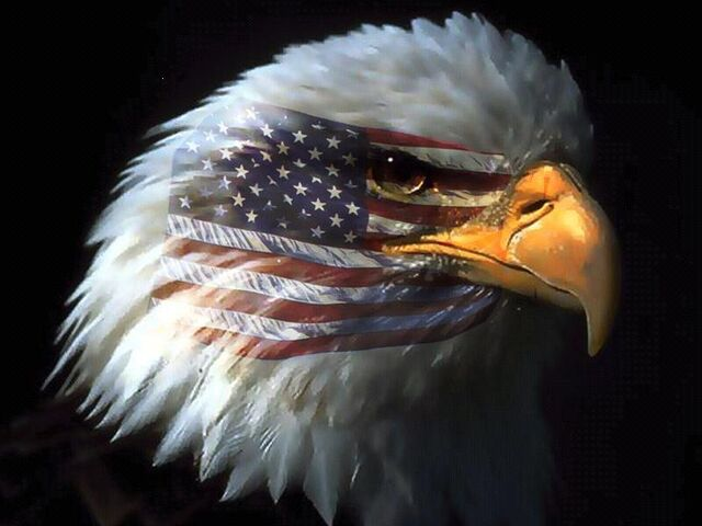 File:American-eagle 0.jpg