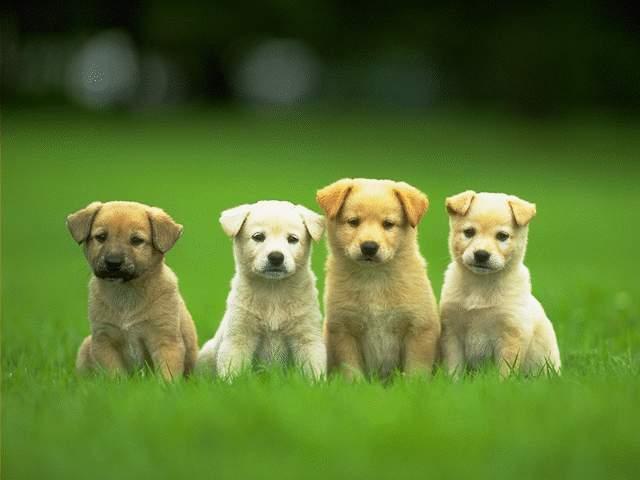 File:Puppies.jpg