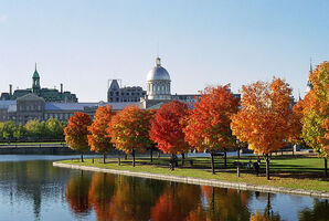 800px-Marché Bonsecours and Foliage