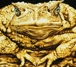 Ooze Toad250