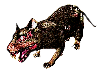 File:Plague rat.png