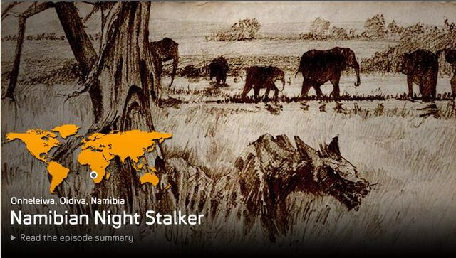File:Namibian Night Stalker.jpg