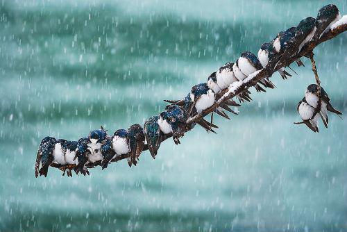 Datei:Winter .jpg