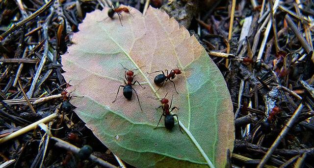 Datei:Ants.jpg