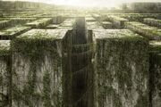 Maze-Maze Runner.jpg