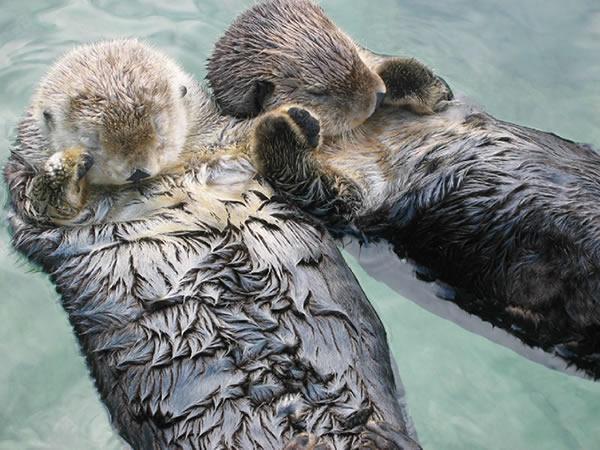 Datei:Otter.jpg