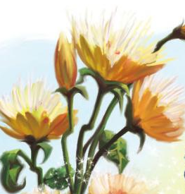 File:Chrysanthe-poppies.png