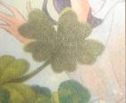 File:Five Leaf Clover.JPG