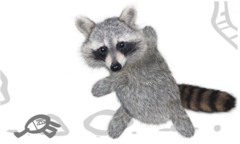 RF VS Raccoon