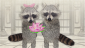 Raccoon and his wife