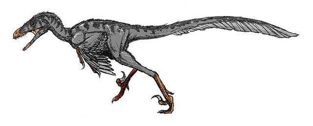 File:800px-Bambiraptor.jpg
