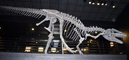Big Al Allosaurus