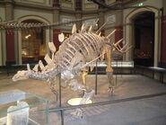 Kentrosaurus IB